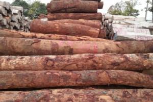 8月8日安哥拉木材砍伐禁