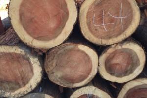 日本对华出口木材量剧增