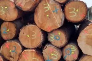 欧洲橡木原木厂家直供