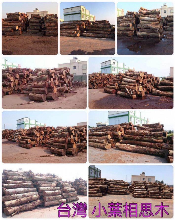 小葉相思樹《樂器級》原木,木板材家具料,刨切大方料,地板坯料,单板,薄片
