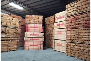 广东进口欧洲榉木板材0.30M~3.60M米长