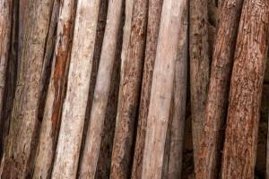 漳州市林业局严厉打击木材运输违法行为