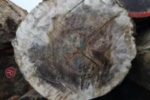 非洲的木材生产商指望在