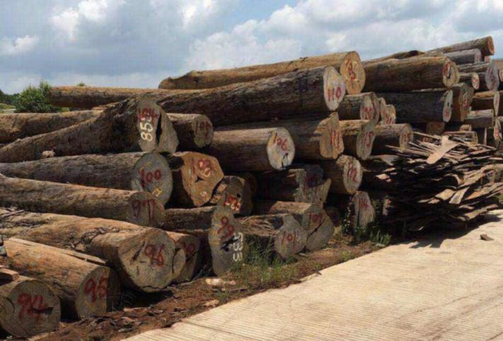 索罗门大叶紫檀(图比Tubi)的木材特别重硬耐久