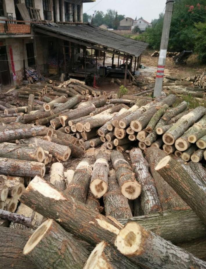 宿迁大量收购原木直径10cm,长度2米,2.6米,有多少要多少!