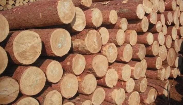 俄罗斯 木材储量世界第一