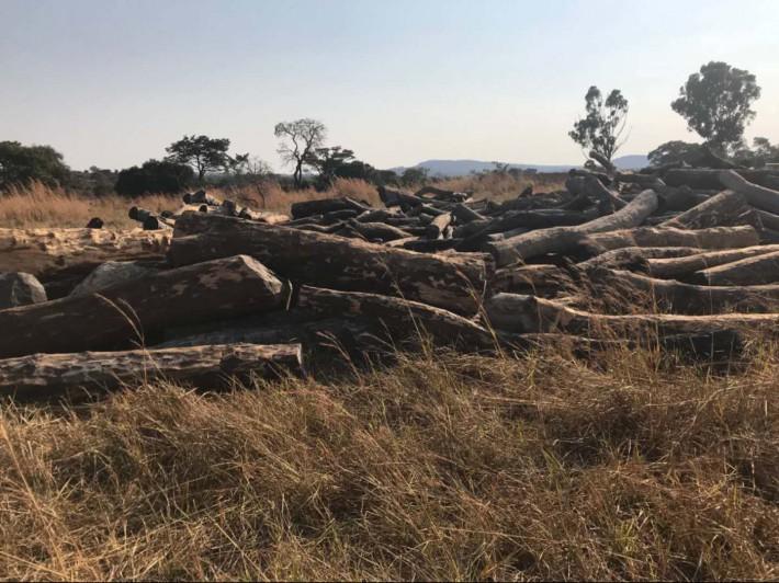 来自赞比亚的血檀(非洲小叶紫檀)被权威机构认定为紫檀木类,