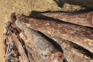 染料血檀(赞比亚)原木厂家直销