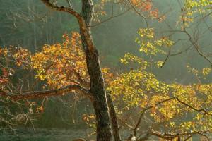 木质最硬的树是哪一种?