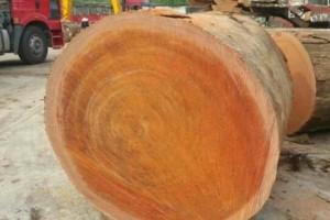 农村常见的树木,哪种木质最硬?