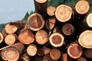 马来西亚无取消橡胶木出