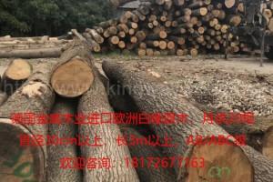 进口欧洲木材 橡木 白橡原木 可锯切板材 实木木料