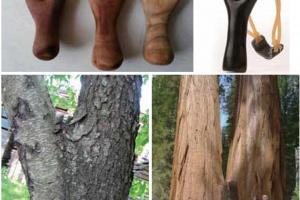 树权纹—木饰面中最珍稀的纹理之一