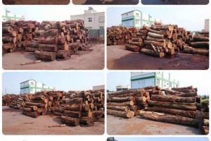 四川清江镇开展木材加工