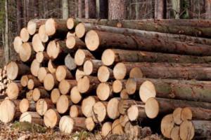 2018年7月原木价格同比上涨2.7%