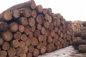 北美木材的进口成本上涨
