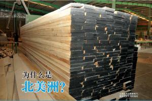 为什么北美洲的天然硬木森林资源对于亚洲制造商来说如此重要呢?