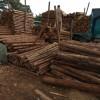 长期大量收购2米杉木原木条