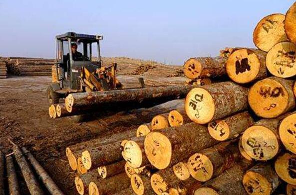 """江苏沭阳""""绿色制造""""加速木材行业转型升级"""