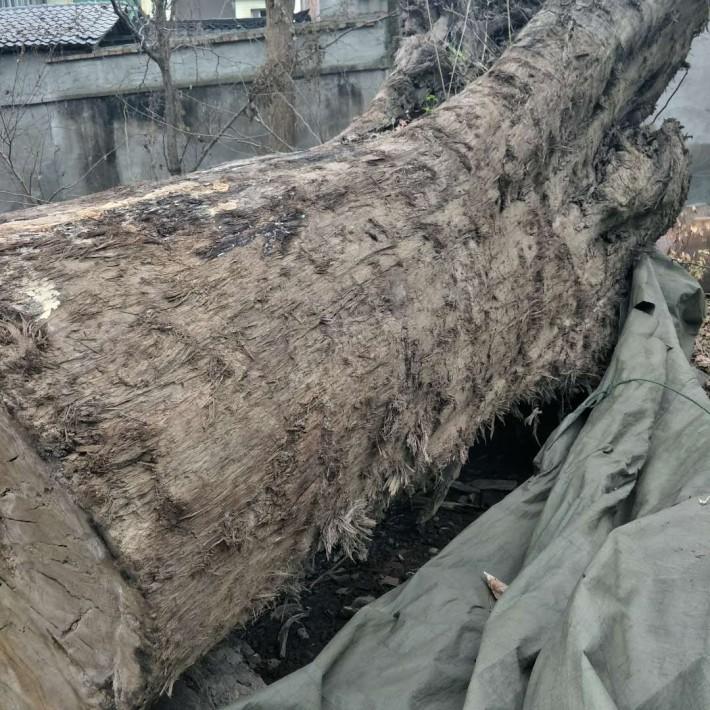 金丝楠木阴沉木原木图片