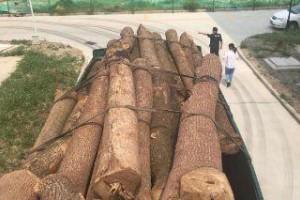 警方查获满载香樟木货车