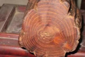 详述一直被遗忘的红木珍宝——柞榛木!