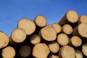 1-7月芬兰原木交易量2650万立方