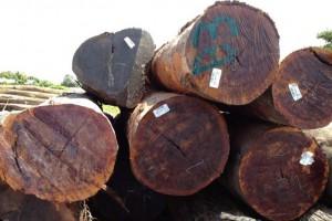 南美木材的爆发性增长,还归功于全球各国对木材的出口限制
