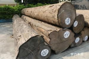柚木原木,缅甸柚木大直径一级产区直径60CM以上的大贸材