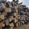 榉木原木-进口木材