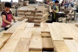 江苏丰县开展木业产业专