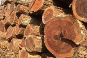 常见的红木替代木材有哪些?