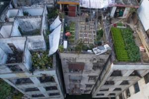 屋顶花园该如何设计?