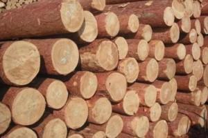天津中北镇铁腕治理老旧木材市场