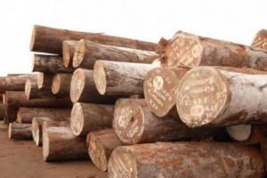 莫桑比克中资木材企业举