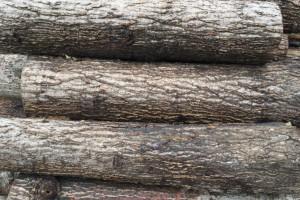 一手货源 白杨木 柳树 柏木 樟木 木材加工 原木批发