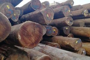 南美柚木原木商品