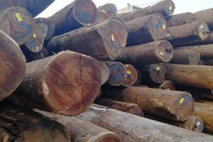 费县依法取缔2家违法木材企业