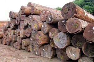 紫心木原木厂家批发价格