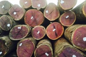 紫心木原木图片