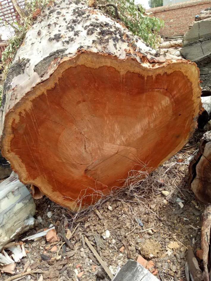 大经红按木原木图片