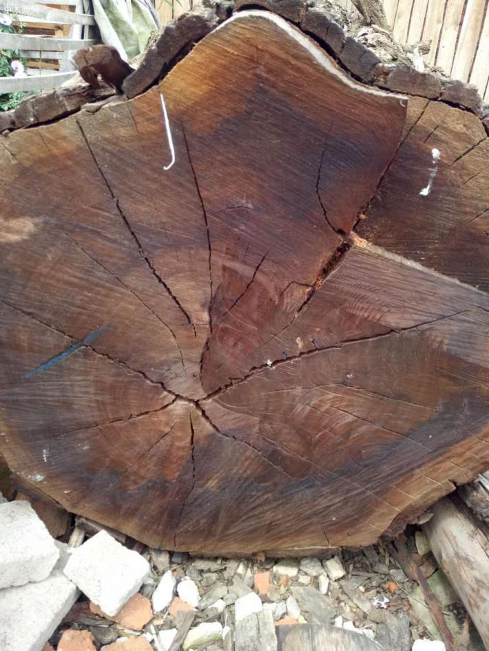 大经红按木原木批发价格