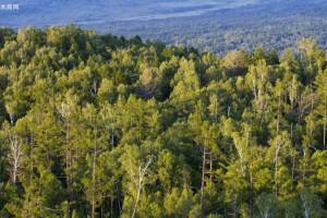 探访内蒙古最大人工林场:五十八载荒山变成林海