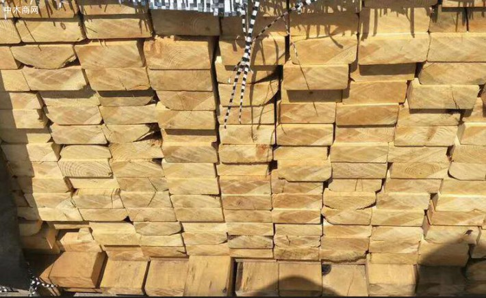 加勒比松建筑木方厂家今日最新报价