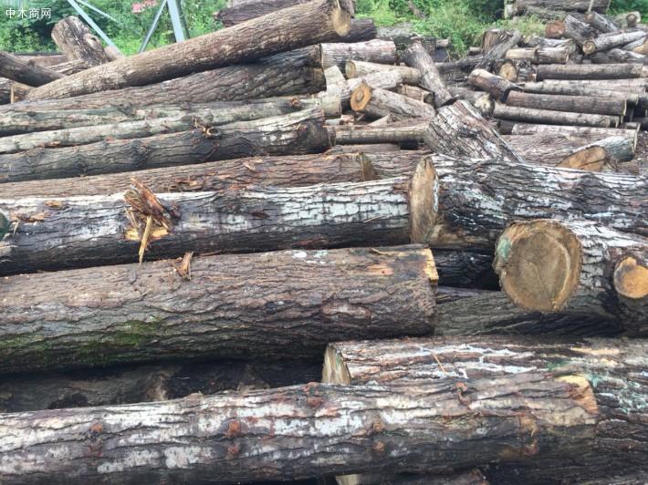 白杨木原木品牌