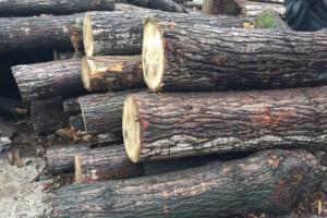 白杨木原木厂家最新价格