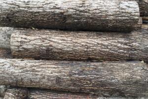 白杨木原木图片
