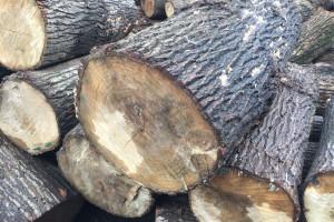 白杨木原木适合做什么产品?