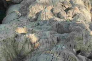 缅甸花梨木,虎皮纹和水波纹