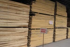 杨木烘干板